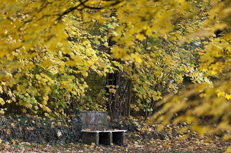 einsame Bank Schlosspark Bückeburg