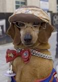 5483Sa-Hund-Havanna-Cuba