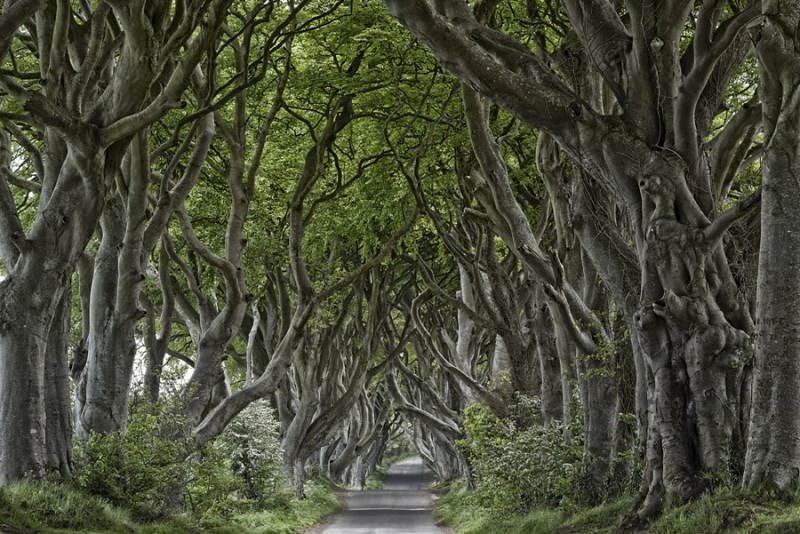1858P Dark Hedges Nordirland Allee 3