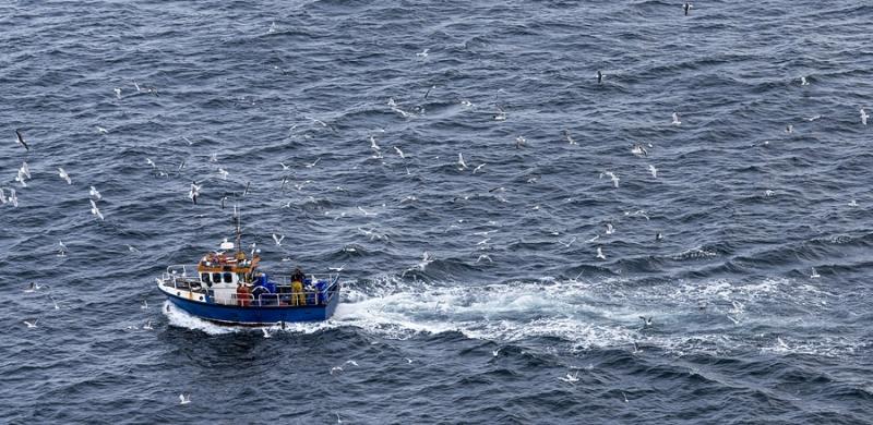 2412P Fischkutter mit Möven Irland