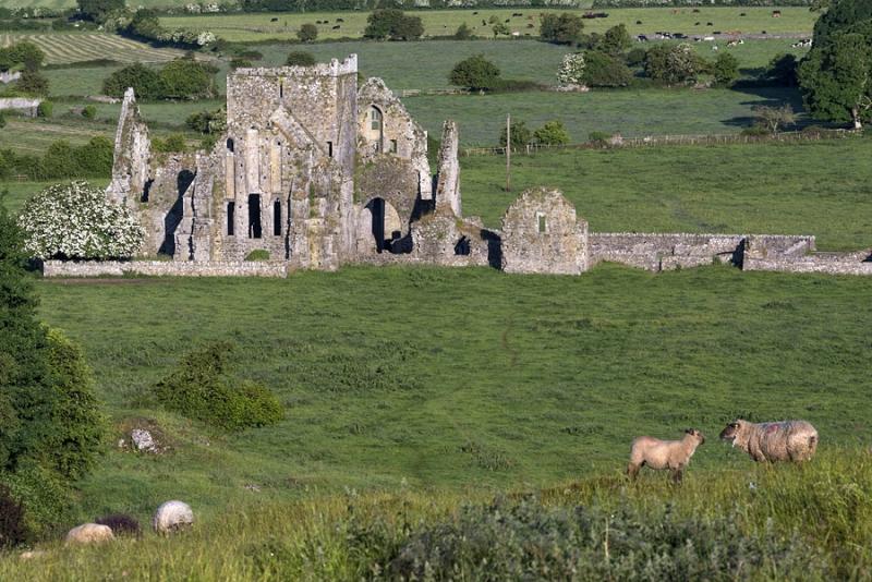 2524P Hore Abbey Cashel Irland 13 Jh Benediktiner Kloster Panorama