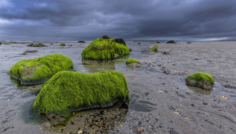 3151Sa Tralee Bay Algen am Strand