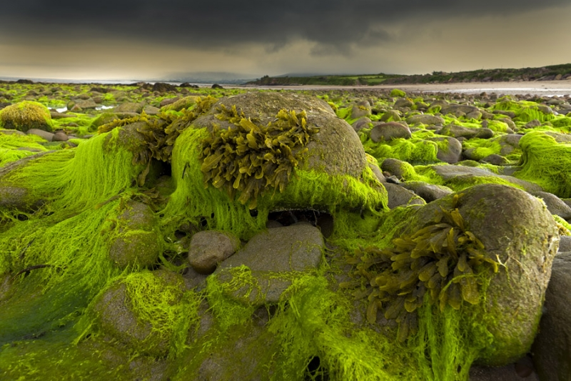 3164Sa Nordirland Algen am Strand