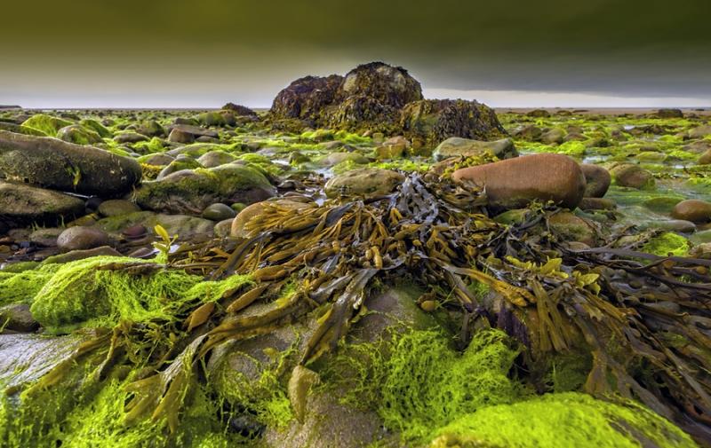 3166Sa Nordirland Algen am Strand