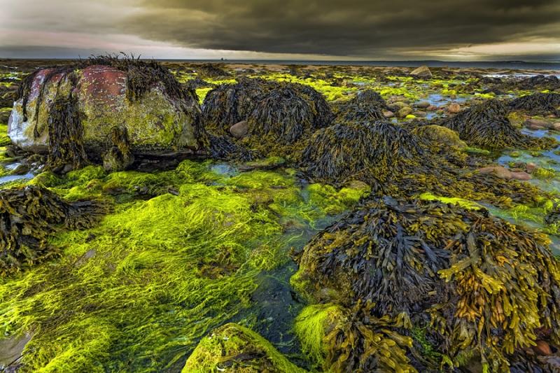3183Sa Irland Tralee Bay Küste Ebbe Algen