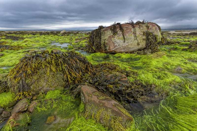 3185Sa Nordirland Algen am Strand