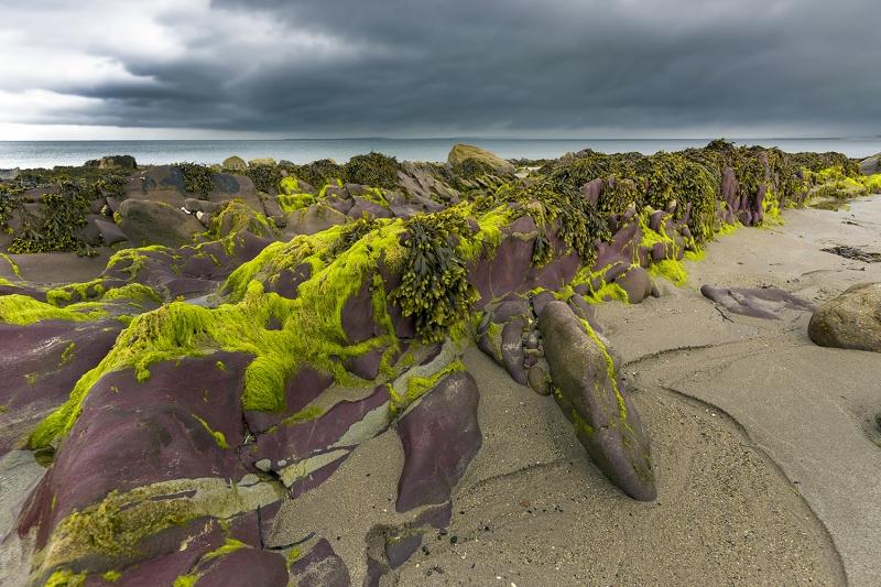 3281Sa Algen Irland Küste Kopie