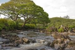 1881P Fluss Irland