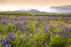 2777B-Hekla-Island-Kopie