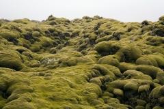 3129B-Moosbewachsene-Lava-Island