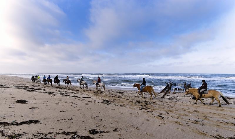 0134K Pferde am Strand Sylt