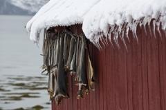 1298L-Trockenfisch-an-der-Hütte-Norwegen