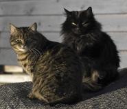 1793L-Katzen