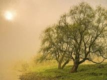 9986M alte Weiden an der Weser Rinteln Nebelstimmung gemalt Druck 80x60