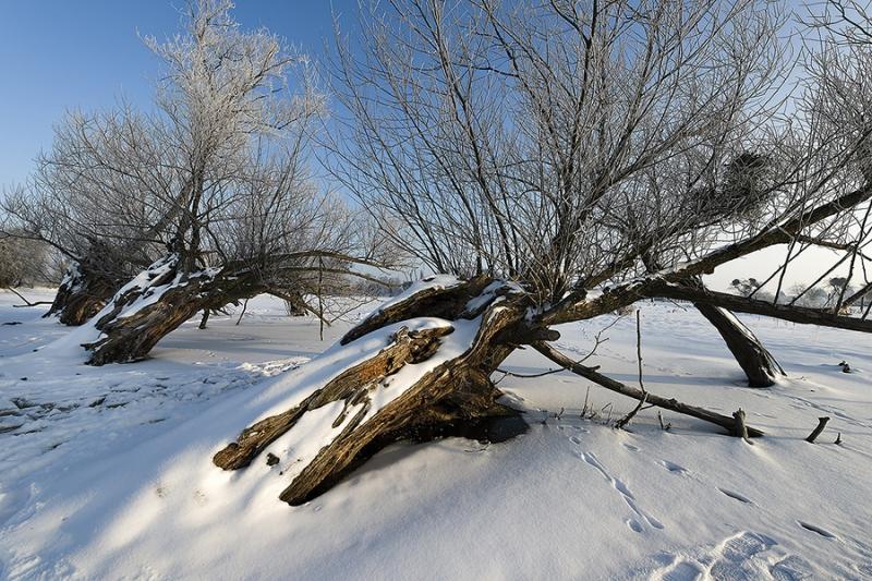 0528L-Kopfweiden-Petzen-Winter