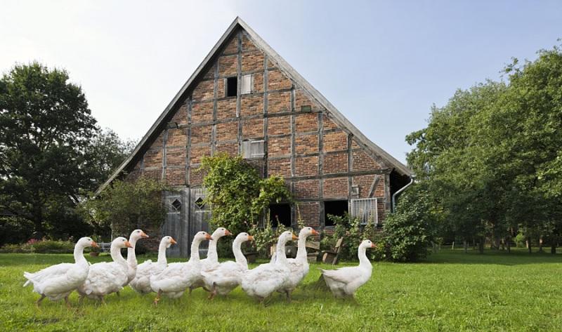 4500M-Bauernhaus-mit-Gaense-2801M