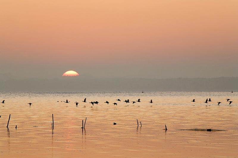 9454 Morgenstimmung am Steinhuder Meer