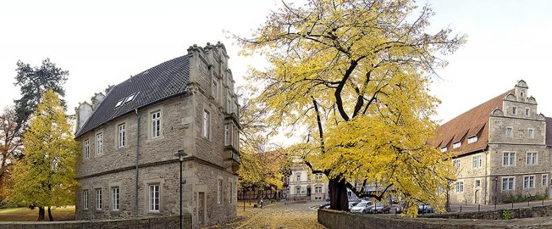 Gerichtslinde vor Schloss in Stadthagen