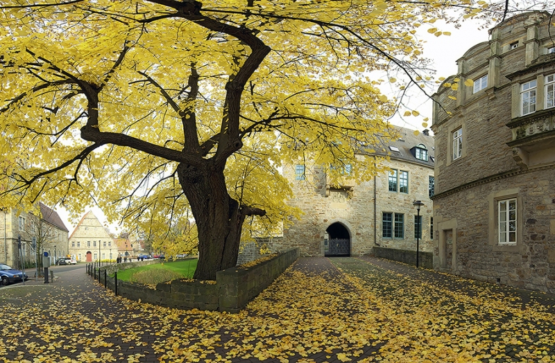 Gerichtslinde vor Schloss in Stadthagen Herbst
